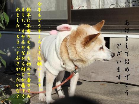 Momo1