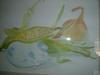toumorokosi